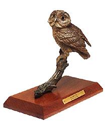 Saw Whet Owl Image